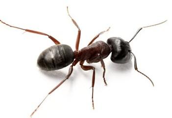 guide des parasites extermination joliette inc recommand par le caa. Black Bedroom Furniture Sets. Home Design Ideas